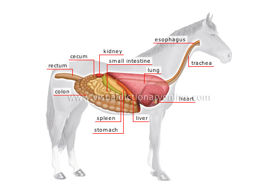 Horse Anatomy Pictures Think Like A Horse Rick Gore Horsemanship