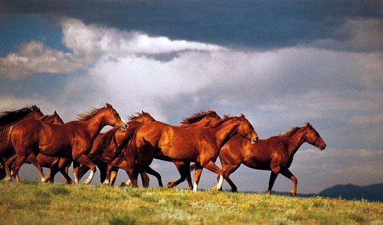 Horsemanship Think Like A Horse Rick Gore Horsemanship