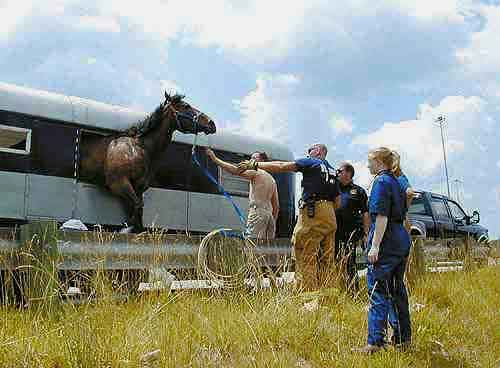 Trailer Loading Think Like A Horse Rick Gore Horsemanship