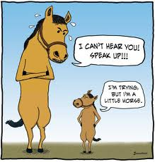Top 10 horse jokes The funniest equine gags on the web