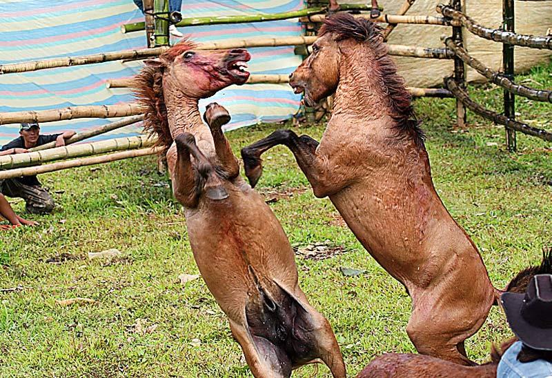Bad Horsemanship Think Like A Horse Rick Gore R