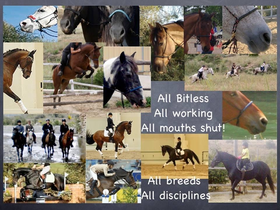 Riding Bitles, Bosals and Hackamores-Think Like a Horse-Rick