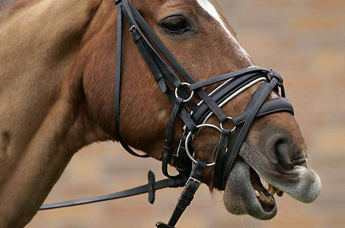 WESTERN HORSE BOSAL HACKAMORE BRIDLE HEADSTALL W// REAL HORSEHAIR MECATE REINS