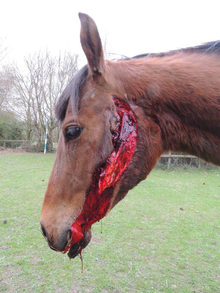 rope halters think like a horse rick gore horsemanship