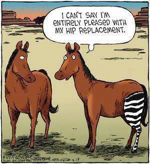 http://thinklikeahorse.org/images2/hip%20replacement.jpg