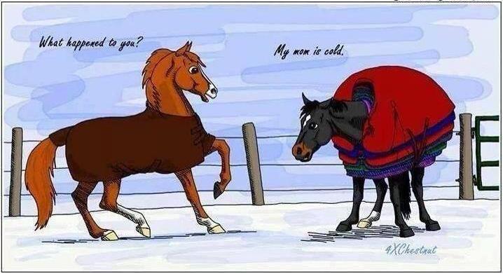 Horse Jokes Think Like A Horse Rick Gore Horsemanship
